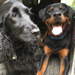 Jett and Nala happy after their walk