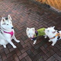 Trio before walk
