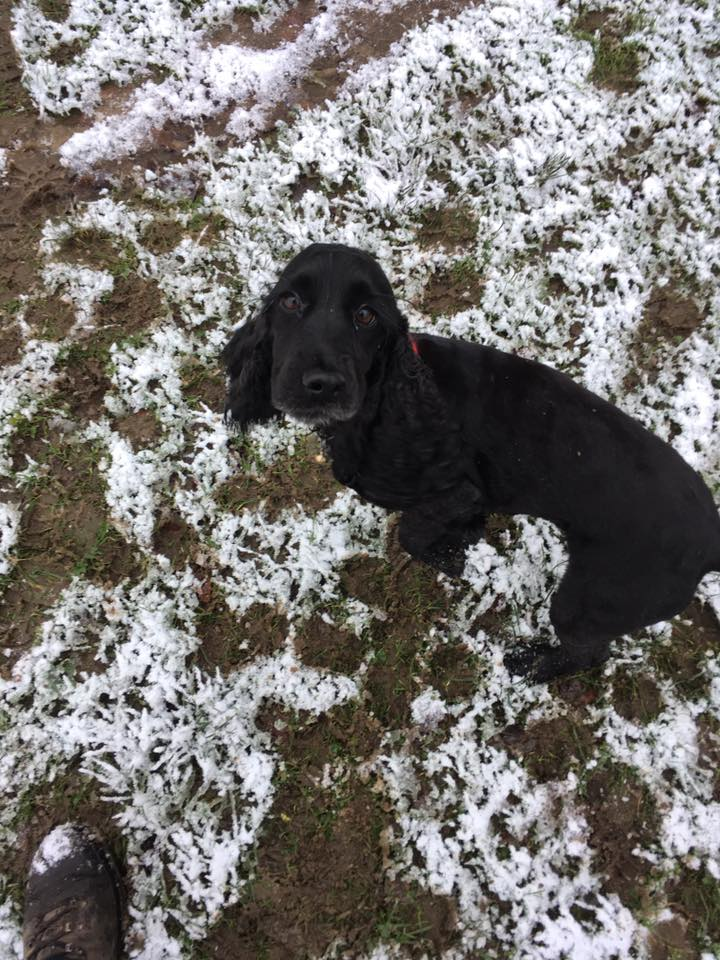 Jett in the snow