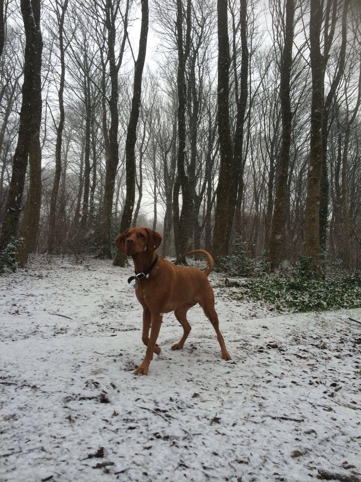 Kaya in the snow