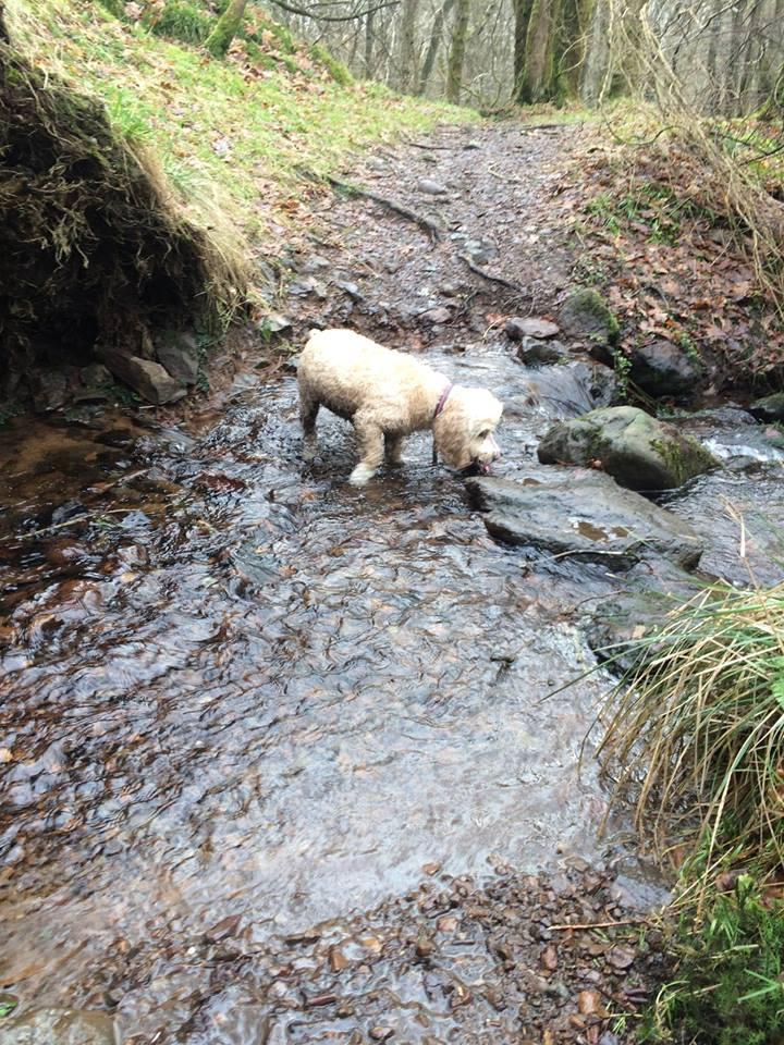 Bella loving the water