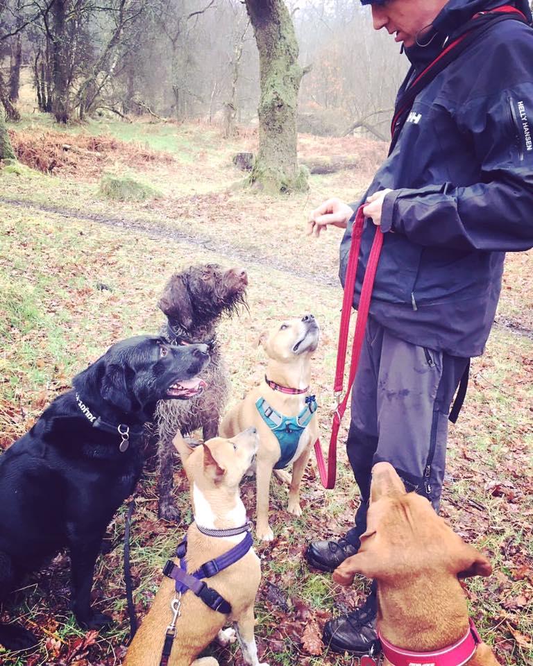 Kenny training dogs